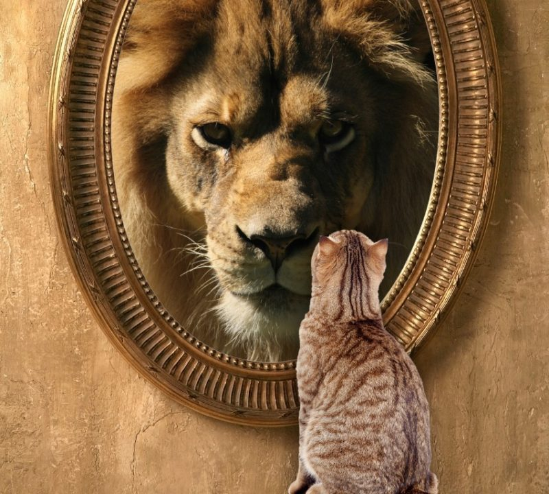 cat-looking-in-mirror-sees-lion (Medium)